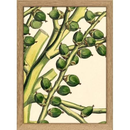 Cadre Plants - 15x21- Chêne