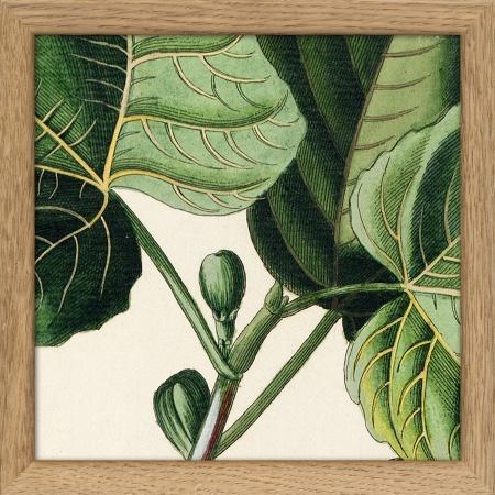 Cadre Lush Green - 15x15 -...