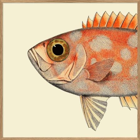 Cadre tête de poisson...