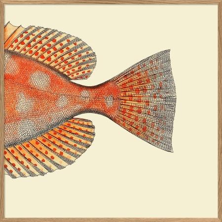 Cadre queue de poisson...