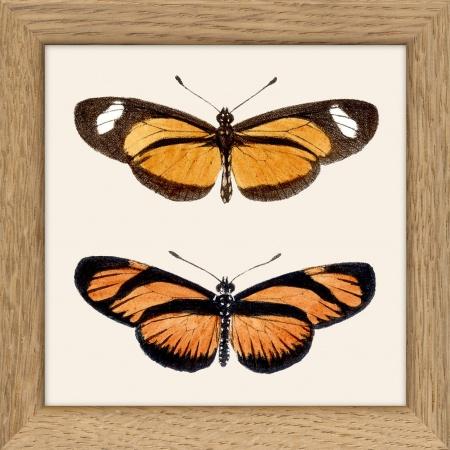 Cadre papillons 10x10 cm