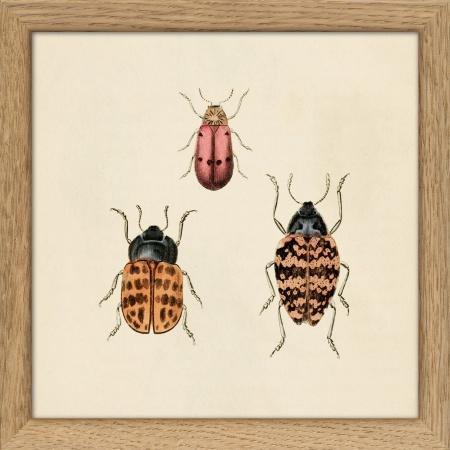 Cadre insectes -  15x15 cm