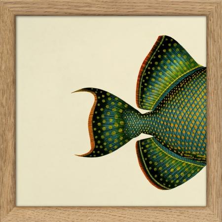 Cadre demi-poisson - 15x15 cm