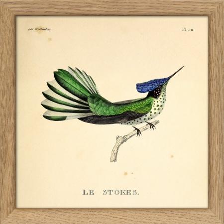 Cadre colibris - 15x15 cm