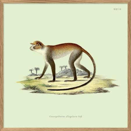 Cadre singe - 15x15 cm