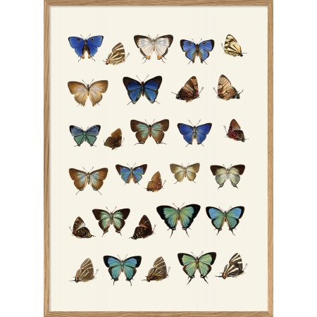 Cadre papillons 50x70 cm