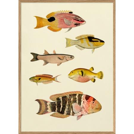 Cadre poissons - 30x40 cm