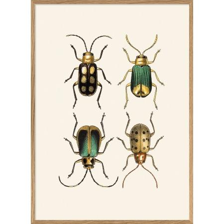 Cadre scarabés - 30x40 cm
