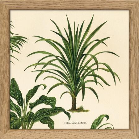 Cadre Plantes - 15x15 cm