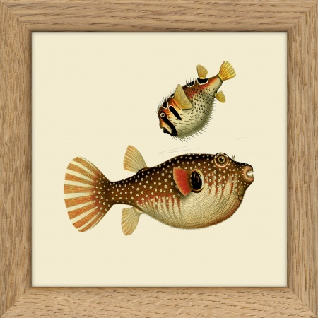 Cadre 2 poissons - 10x10 cm