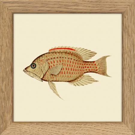 Cadre poisson  - 10x10 cm